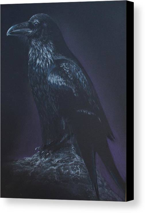 Canvas Print featuring the drawing Noble Raven by Diana Schmidt