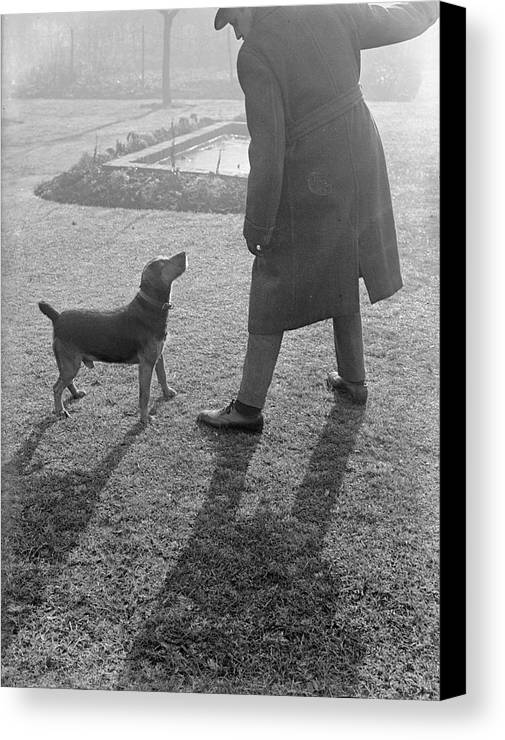Mid Adult Canvas Print featuring the photograph Bad Dog by Chaloner Woods