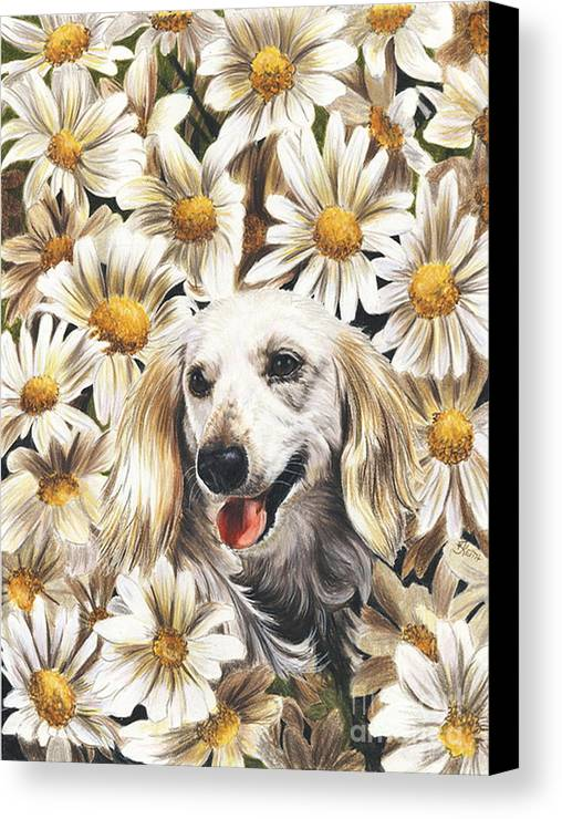Dachshund Canvas Print featuring the drawing Camoflaged by Barbara Keith