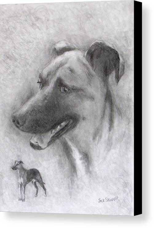 Dog Canvas Print featuring the drawing Eliot by Jack Skinner