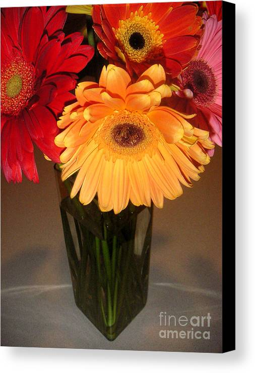 Nature Canvas Print featuring the photograph Gerbera Daisies - Vased by Lucyna A M Green