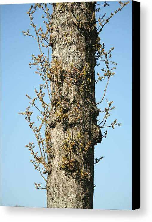 Tree Canvas Print featuring the photograph Growing In All Directions by Magda Levin-Gutierrez