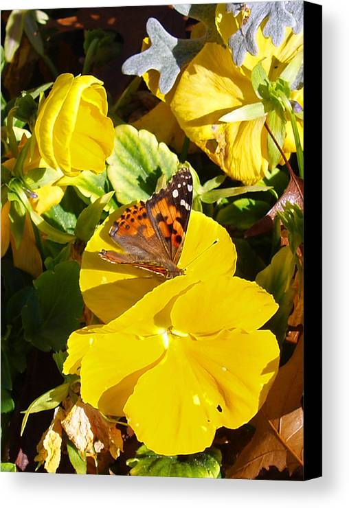 Floral Canvas Print featuring the photograph Nature's Disquise I by James Granberry