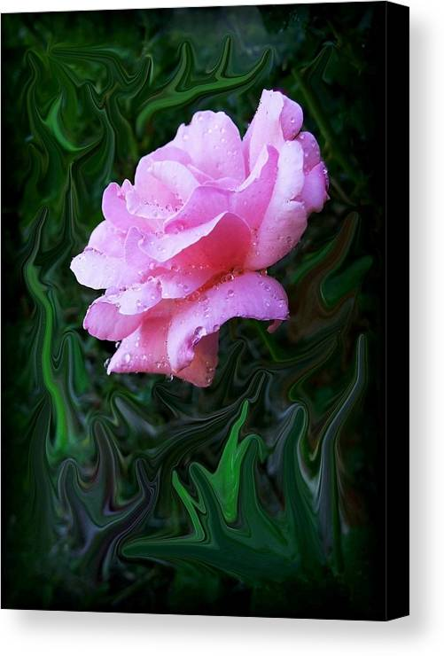 Rose Canvas Print featuring the photograph Pink Rose by Jim Darnall