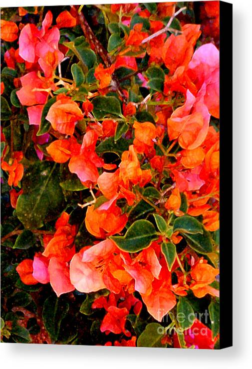 Pink Bougainvilleas Canvas Print featuring the painting Spectacular Bogies by Elinor Mavor