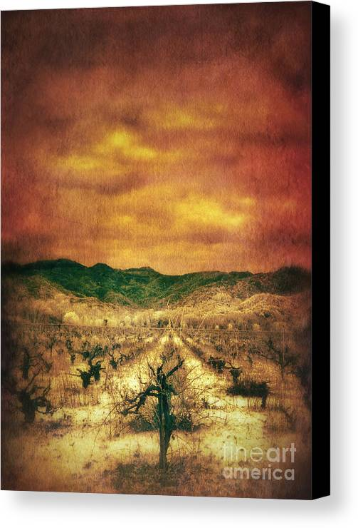 Vineyard In Winter Canvas Print featuring the photograph Sunset Over Vineyard by Jill Battaglia