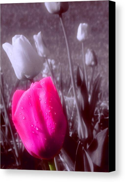 Flower Canvas Print featuring the photograph Uniqueness by Kenneth Krolikowski