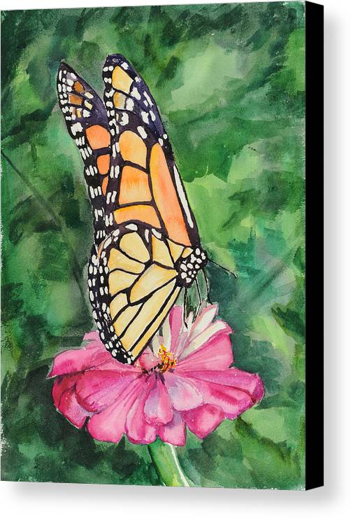 Watercolor. Butterfly Canvas Print featuring the painting Zinnia And Monarch by Judy Loper