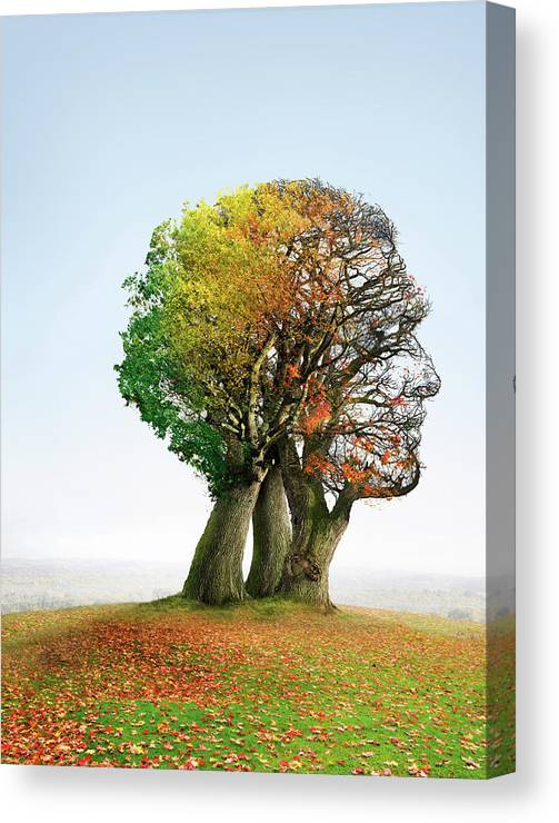 Tree Canvas Print featuring the photograph Ageing by Smetek