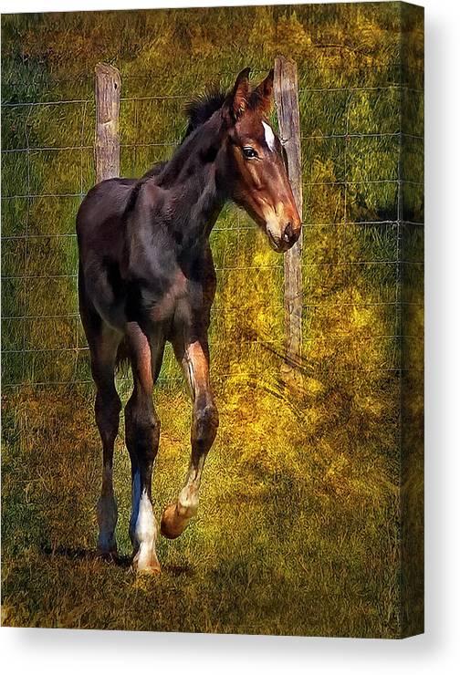 Horse Canvas Print featuring the photograph All Legs And Attitude by Steve Harrington
