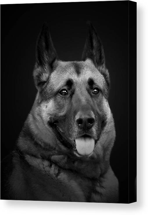 Dog Canvas Print featuring the photograph German Shepard by Cecil Fuselier