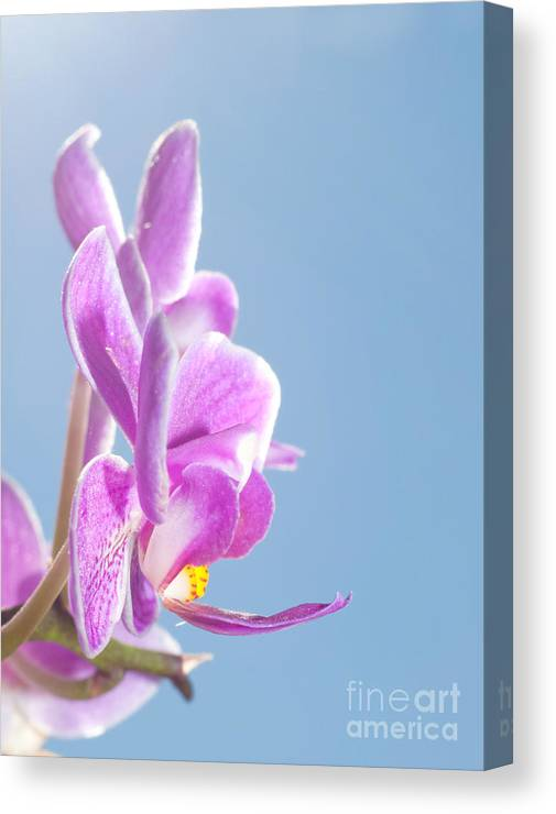 Beautiful Canvas Print featuring the photograph Pink Orchid Blue Sky by Sari ONeal