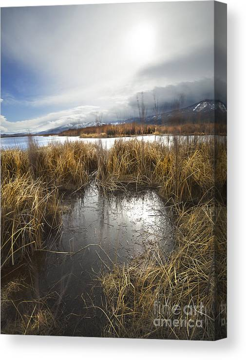 Grass Canvas Print featuring the photograph Protected Wetlands by Dianne Phelps
