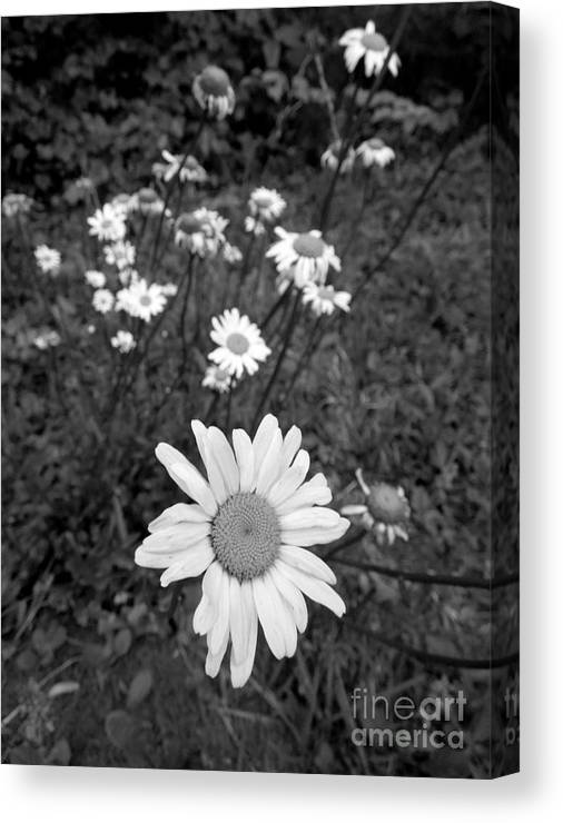Wild Canvas Print featuring the photograph Follow The Leader 2 by Renee Trenholm