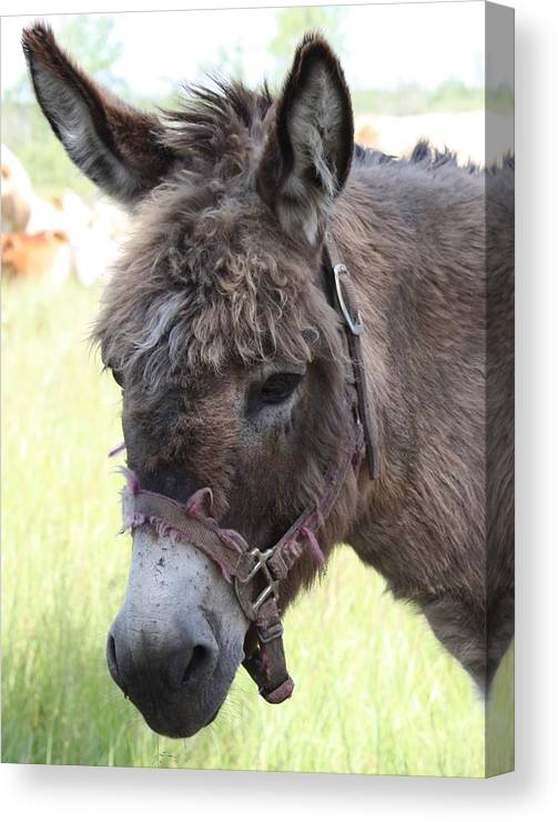 Donkey Canvas Print featuring the photograph Mr. Handsome by Pat Purdy