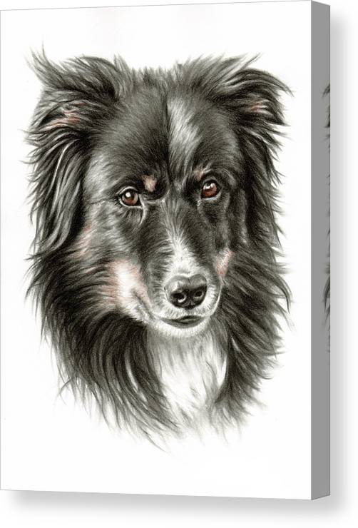 Dog Canvas Print featuring the drawing Border Collie Portrait by Nicole Zeug