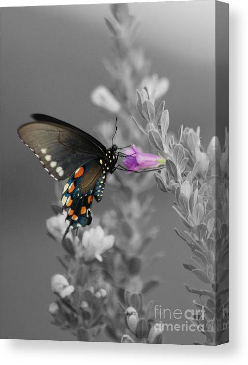 Butterfly Canvas Print featuring the photograph Butterfly And Flower by Jim Wright