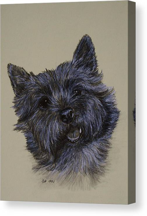 Cairn Canvas Print featuring the drawing Cairn Terrier by Susan Herber