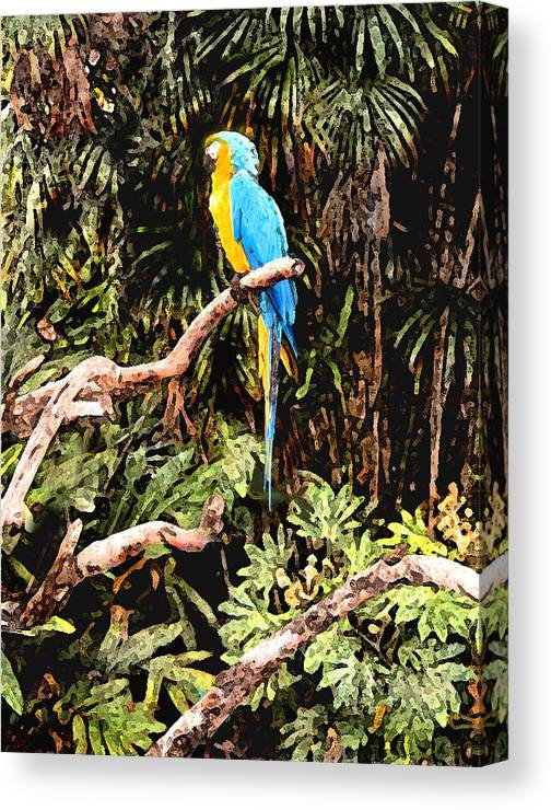 Parrot Canvas Print featuring the photograph Parrot by Steve Karol