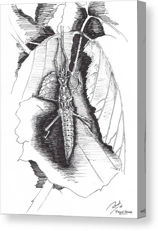 Bugs Canvas Print featuring the drawing Stick by Ramiliano Guerra