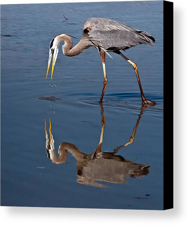 Bird Canvas Print featuring the photograph Could That Be How I Really Look by Geraldine Alexander