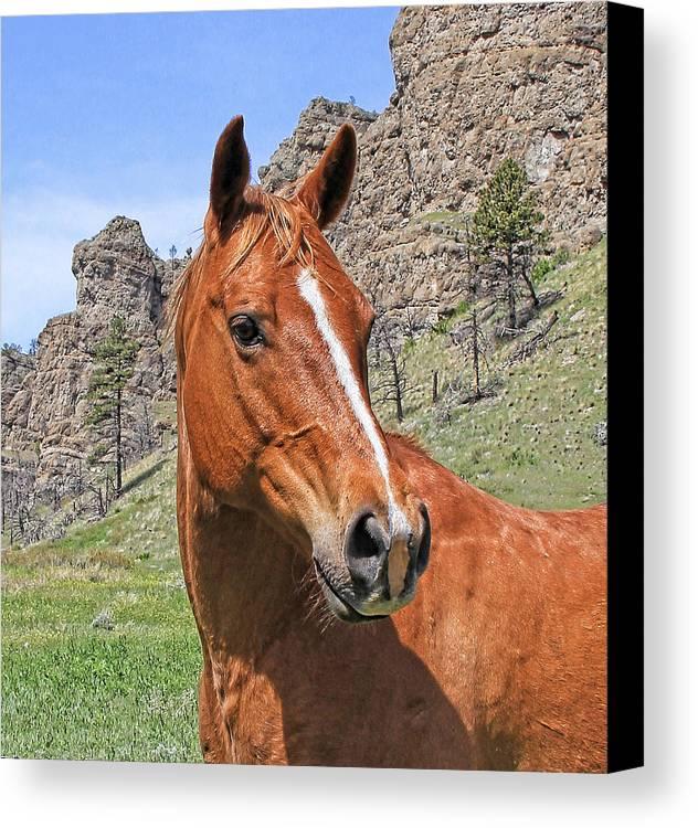 Horse Canvas Print featuring the photograph Quarter Horse Portrait Montana by Jennie Marie Schell