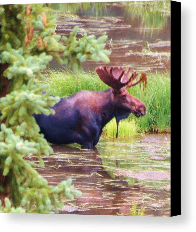 Moose Canvas Print featuring the photograph Wet And Wild by Feva Fotos
