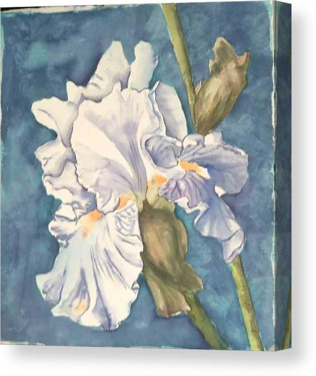 Watercolor Canvas Print featuring the painting Iris Twenty One by Diane Ziemski