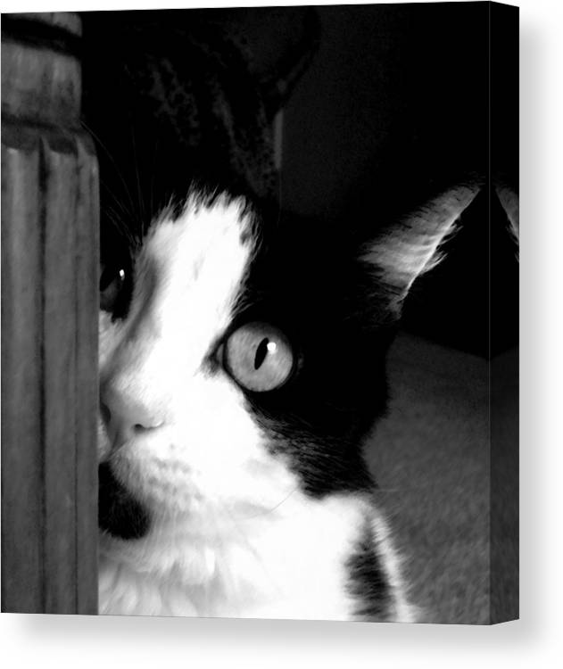 Black And White Canvas Print featuring the photograph My Moo by Holly Ethan
