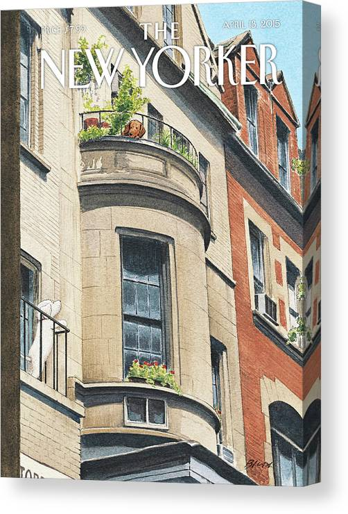 Dog Canvas Print featuring the painting Balcony Scene by Harry Bliss