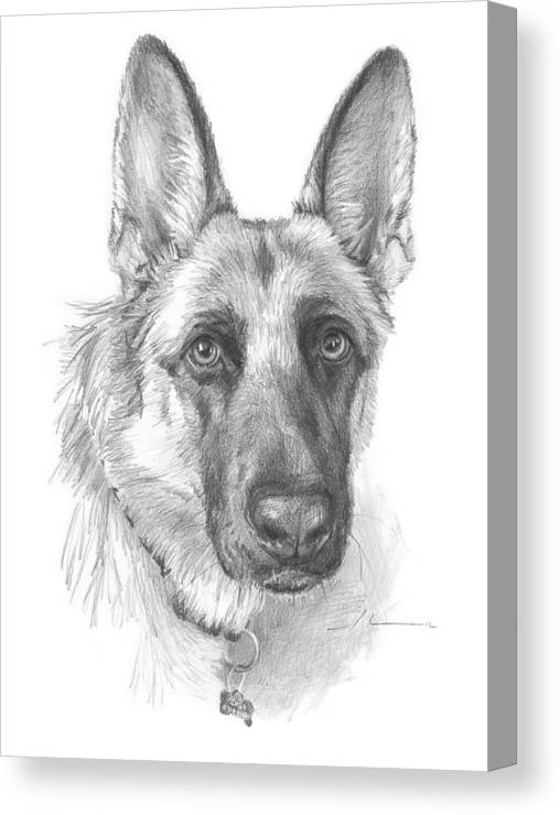 <a Href=http://miketheuer.com Target =_blank>www.miketheuer.com</a> German Shepherd Face Pencil Portrait Canvas Print featuring the drawing German Shepherd Face Pencil Portrait by Mike Theuer