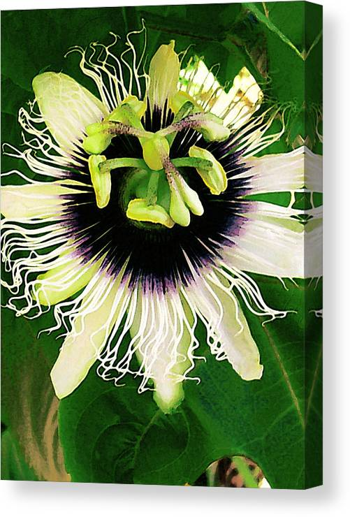 Hawaii Iphone Cases Canvas Print featuring the photograph Lilikoi Flower by James Temple