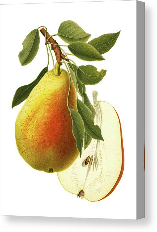 Art Canvas Print featuring the digital art Pear by Ivan-96