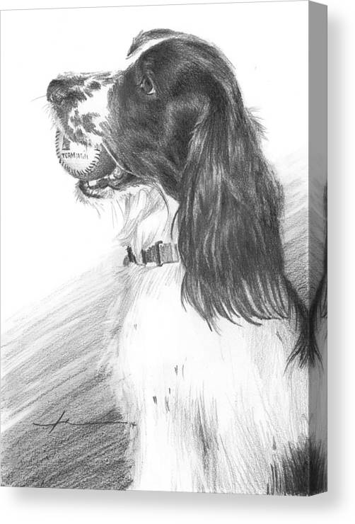 <a Href=http://miketheuer.com Target =_blank>www.miketheuer.com</a> Canvas Print featuring the drawing Springer Spaniel Playing Fetch Pencil Portrait by Mike Theuer