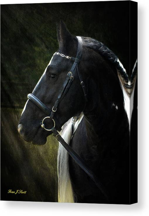 Horses Canvas Print featuring the photograph Val Headshot by Fran J Scott