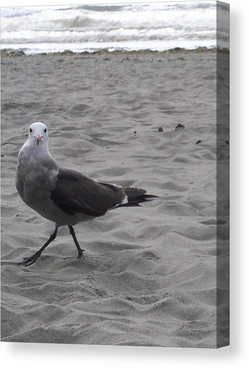 Seagull Canvas Print featuring the photograph What are you looking at by Valerie Josi