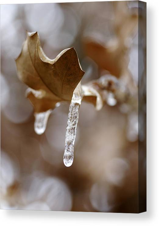 Ice Canvas Print featuring the photograph Winter In The Hill Country by Bill Morgenstern