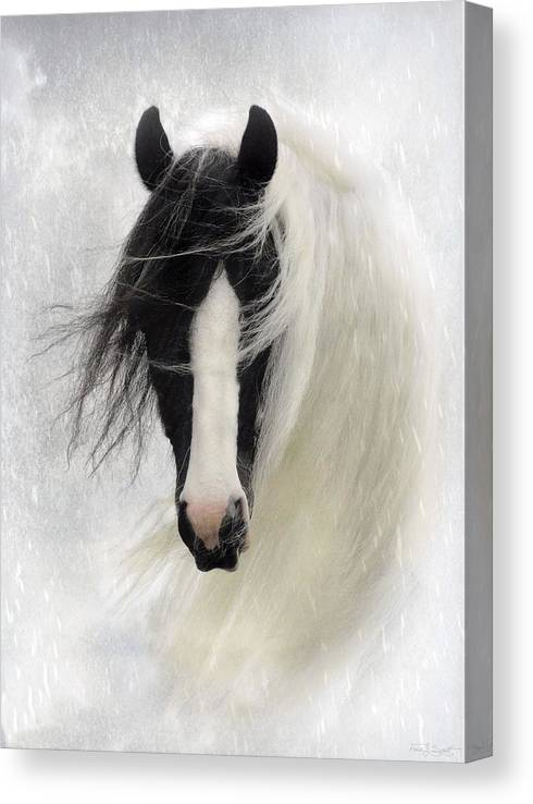 Horses Canvas Print featuring the photograph Wisteria by Fran J Scott