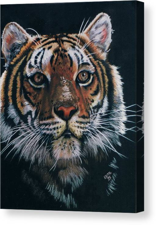 Tiger Canvas Print featuring the drawing Backlit Tiger by Barbara Keith