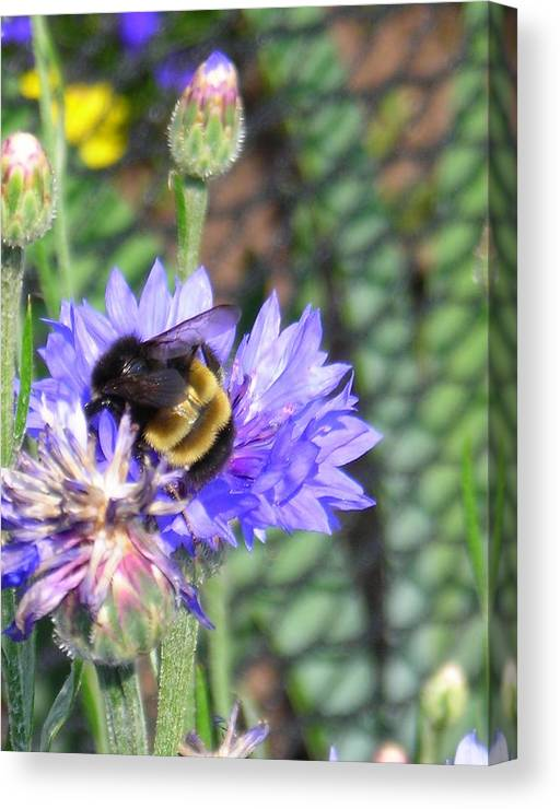 Bee Canvas Print featuring the photograph Bee Bee by Peter Mowry