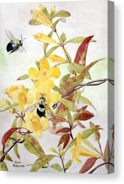 Jasmine Canvas Print featuring the painting Jessamine Bee Mine by Jean Blackmer