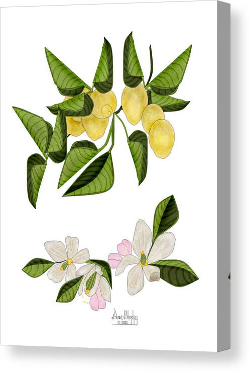 Lemons Canvas Print featuring the painting Lemons and Lemon Blossoms by Anne Norskog