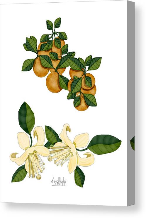 Oranges Canvas Print featuring the painting Oranges and Orange Blossoms by Anne Norskog
