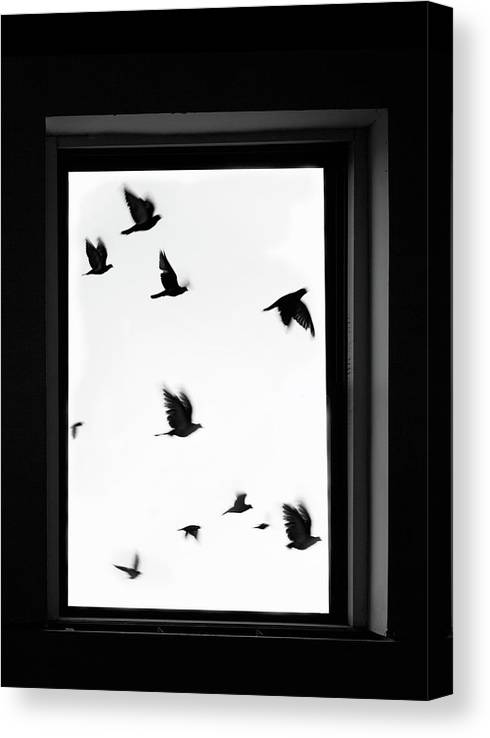 Spooky Canvas Print featuring the photograph Flock Of Crows Seen Through A Window by Grant Faint
