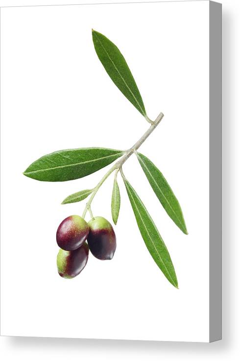 White Background Canvas Print featuring the photograph Olives On Branch by Lauren Burke