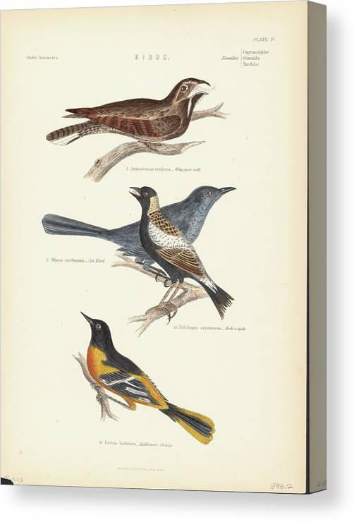 Music Canvas Print featuring the photograph Order Passeriformes by Kean Collection