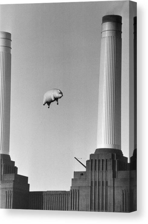 Pig Canvas Print featuring the photograph Pink Floyds Pig by Keystone