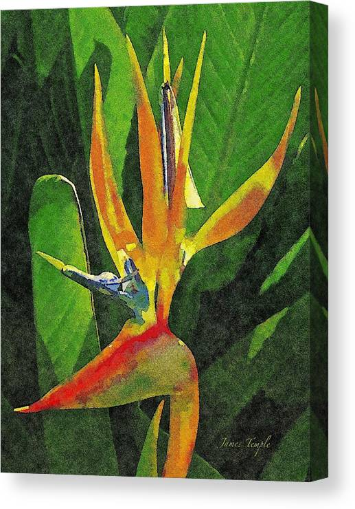 Bird Of Paradise Canvas Print featuring the digital art Subject Paradise by James Temple