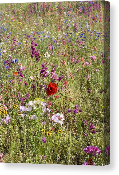 Outdoors Canvas Print featuring the photograph Mixed colourful wildflowers by Lyn Holly Coorg