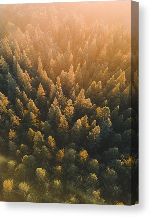 Tranquility Canvas Print featuring the photograph High Angle View Of Trees In Forest by Connor Vaughan / EyeEm